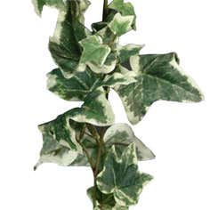 Artificial Holland Ivy Garland