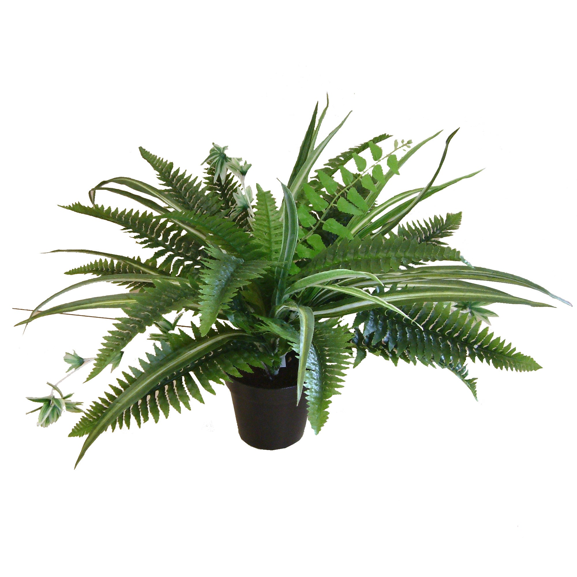 Artificial Mixed Fern Plant