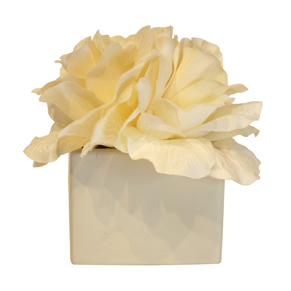 Classic Elegance Collection Cream Roses in Pot