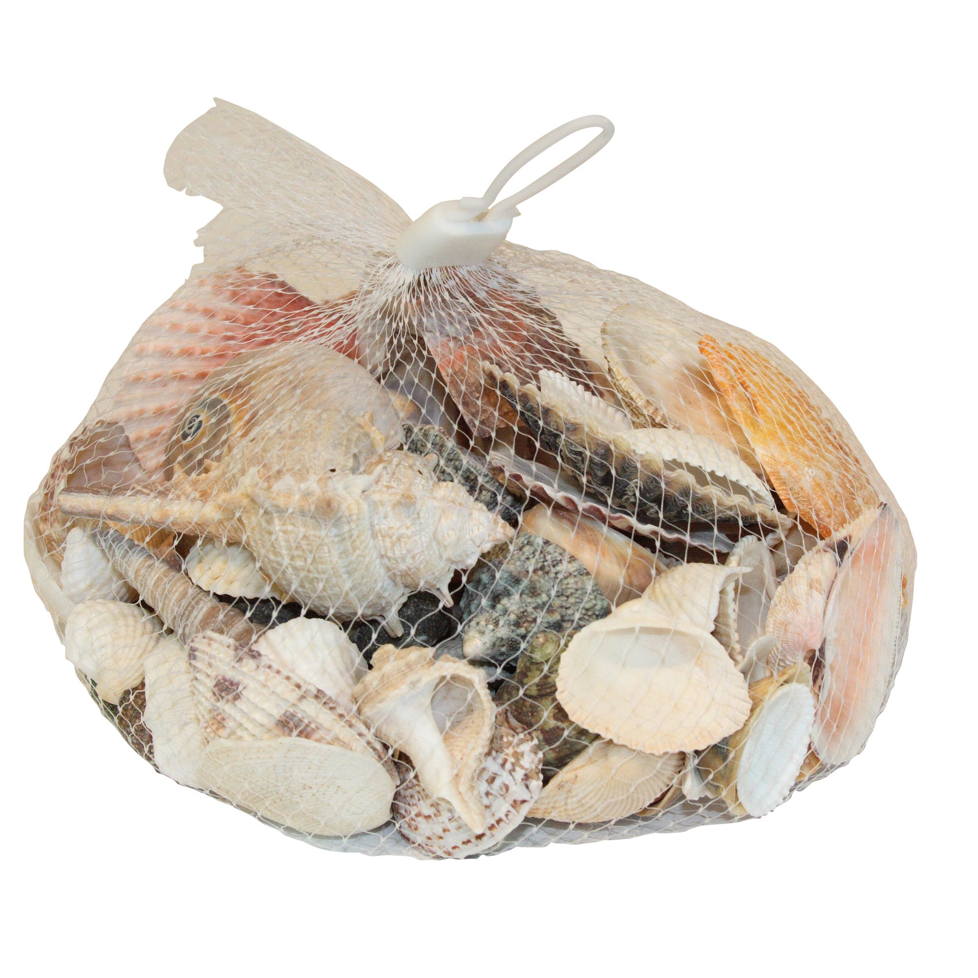 Coastal Collection Decorative Shells