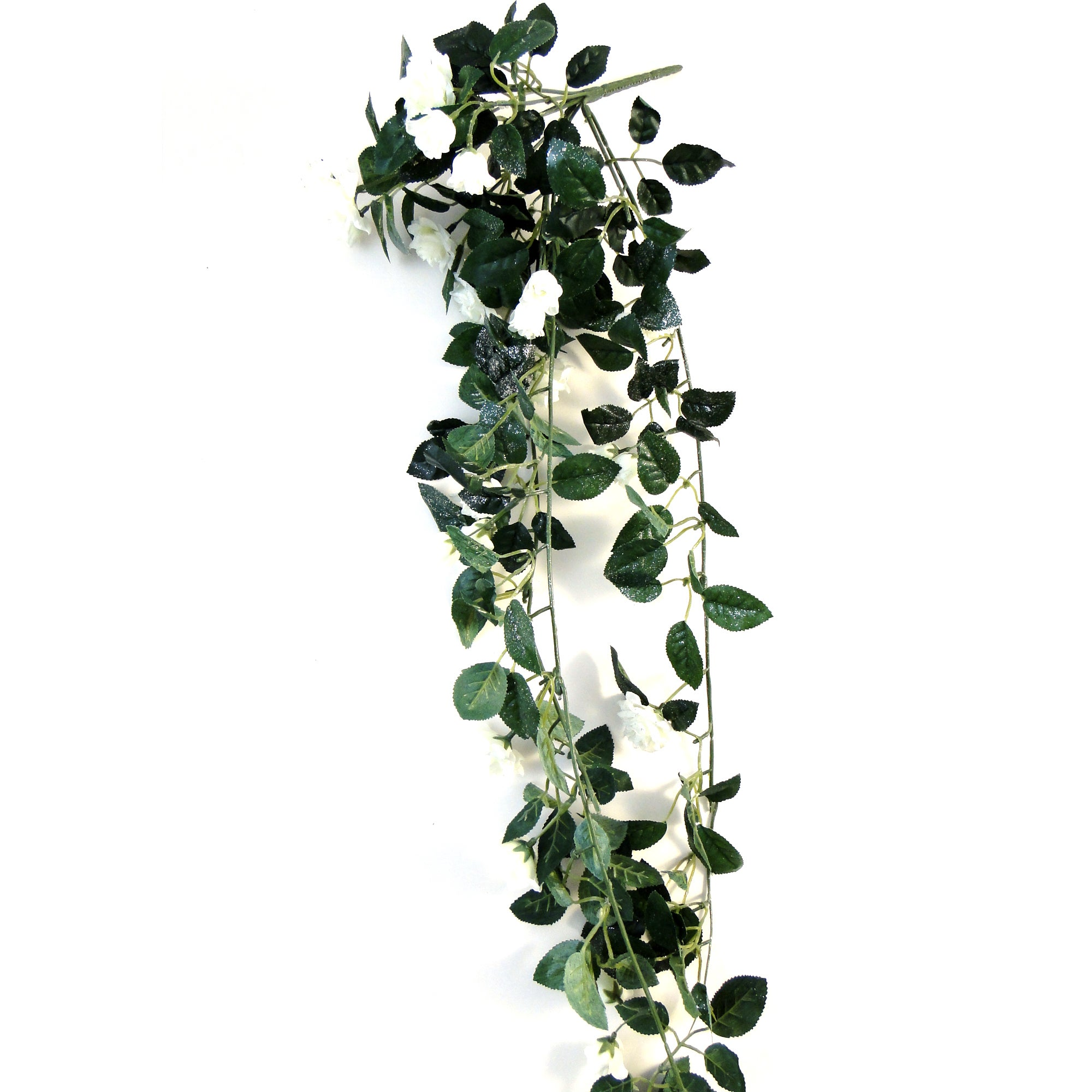 Wedding Collection Trailing Mini Rose Bush