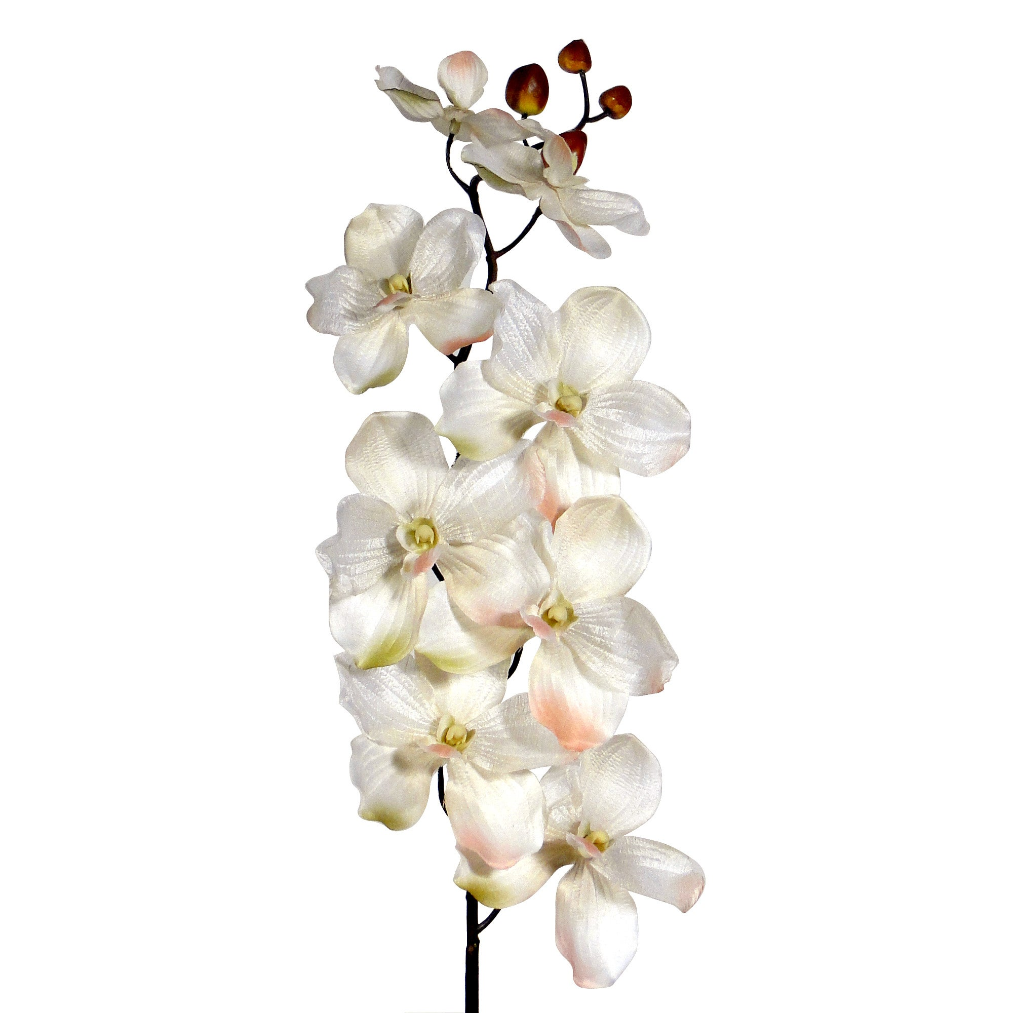 Crinkle Orchid Spray 78cm Cream