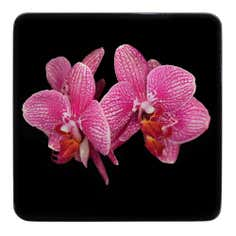 Pack of 4 Pink Orchid Coasters