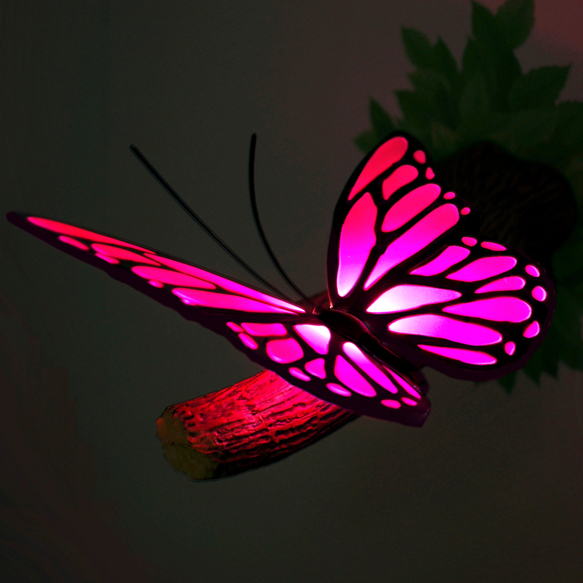 3D Butterfly Wall Light