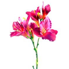 Pink Lily Three Head Spray