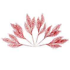 Red Filigree Fern Pick Bundle