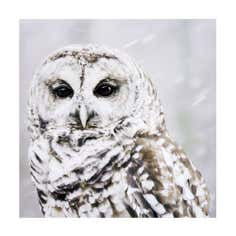 Winter Cottage Collection Owl Canvas