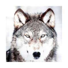 Winter Cottage Wolf Canvas