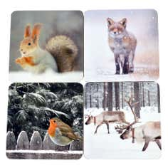 Set of 4 Photographic Animal Coasters